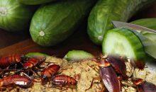Tips Alami Dan Aman Membasmi Kecoa Di Rumah